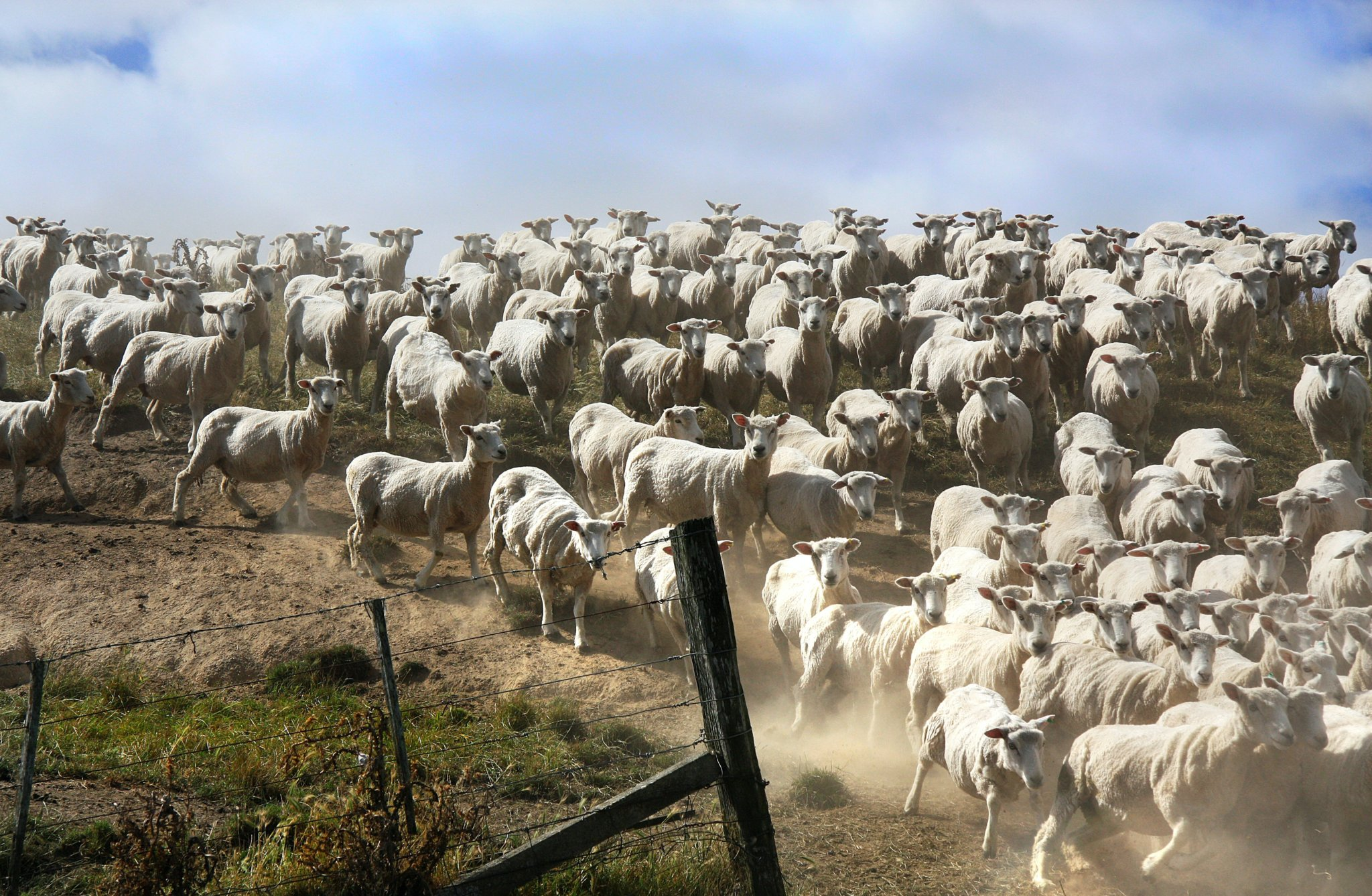 herd mentality scaled